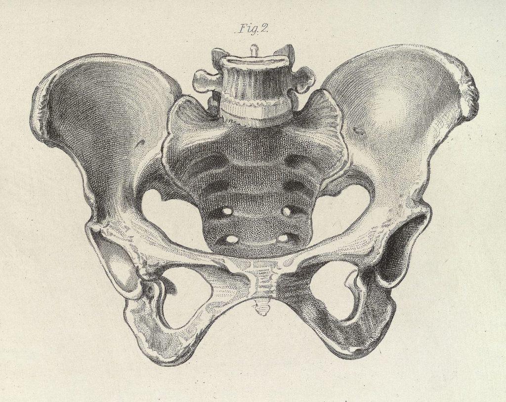 Diagram_of_the_female_pelvis_Wellcome_L0038287